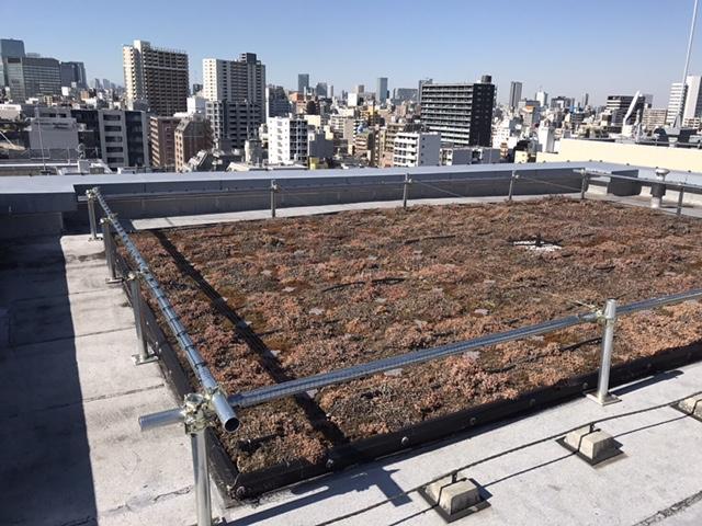 屋上緑化、ウミネコ被害防止。江東区森下鳥害対策工事③