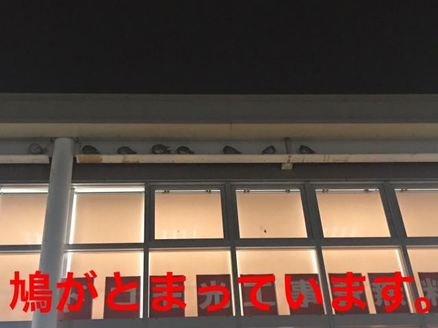 壁面看板部分や2F屋根に住み着き下の駐輪場がフン害に遭っているのでどうにかしたい・・神奈川県藤沢市で鳩対策
