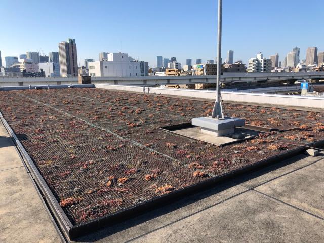 屋上緑化を活かすにはウミネコ被害を想定して事前対策
